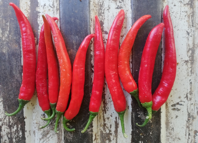 Wholesale Red Hot Chili Pepper